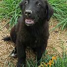 Adopt A Pet :: Albert - Niagra Falls, NY