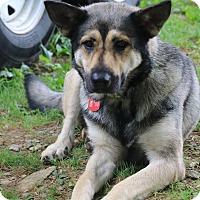 Adopt A Pet :: Sarafina - Portland, ME