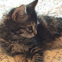 Adopt A Pet :: Rowdy - Prescott, AZ
