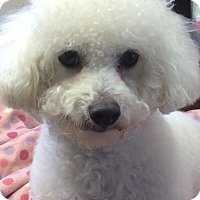 Adopt A Pet :: Raquel - Suffolk, VA