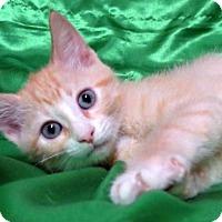 Adopt A Pet :: Mikey - St. Louis, MO