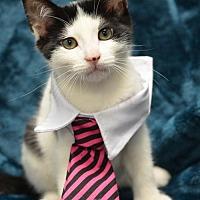 Adopt A Pet :: Diego171220 - Atlanta, GA