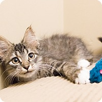 Adopt A Pet :: Karina - Chicago, IL