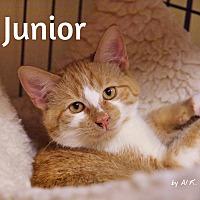 Adopt A Pet :: Junior - Ocean City, NJ