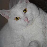 Adopt A Pet :: Chablis - Green Bay, WI