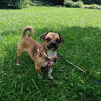 Adopt A Pet :: Elijah - New Oxford, PA