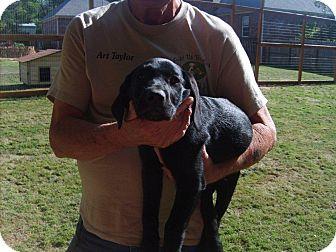 Labrador Retriever Mix Puppy for adoption in East Hartford, Connecticut - AUTUMN adoption pending