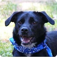 Adopt A Pet :: Payton - Mocksville, NC