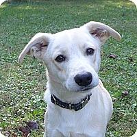 Adopt A Pet :: Aspen - Mocksville, NC
