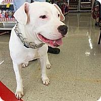Adopt A Pet :: Lola Houdini - Silver Lake, WI