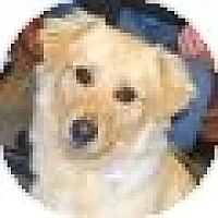 Adopt A Pet :: Ike - Denver, CO