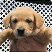 Adopt A Pet :: July - Cumming, GA