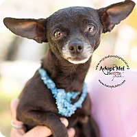 Adopt A Pet :: HUDSON - Inland Empire, CA