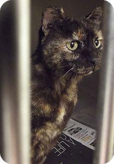 Domestic Shorthair Cat for adoption in Cheboygan, Michigan - FROSTY