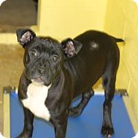 Adopt A Pet :: Ren - Covington, LA