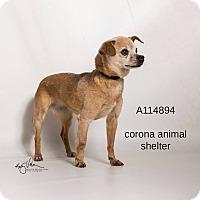 Adopt A Pet :: NINA - Corona, CA
