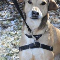 Adopt A Pet :: Jacks - Batavia, OH