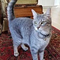 Adopt A Pet :: Emma Rae - Bellingham, WA