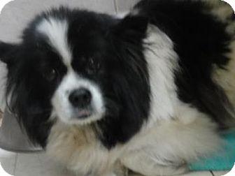 Welsh Corgi Mix Dog for adoption in Philadelphia, Pennsylvania - Mathilda