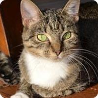 Adopt A Pet :: Hope - Xenia, OH