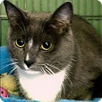 Adopt A Pet :: Bella - Medway, MA