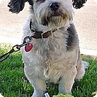 Adopt A Pet :: Sunny good with kids - Sacramento, CA