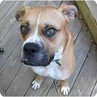 Adopt A Pet :: Biscuit - Brunswick, GA