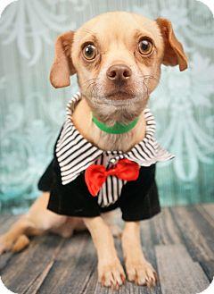 Chihuahua/Miniature Pinscher Mix Dog for adoption in Phoenix, Arizona - Squiggy