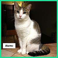 Adopt A Pet :: Nemo - Miami, FL
