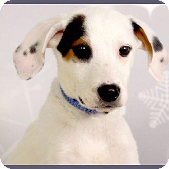 Terrier (Unknown Type, Medium)/Hound (Unknown Type) Mix Puppy for adoption in Hardinsburg, Kentucky - DOONEY