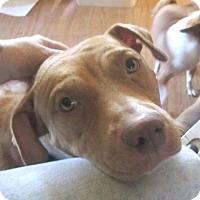 Adopt A Pet :: Ginger - Copperas Cove, TX