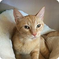 Adopt A Pet :: Ginger - Kingston, WA