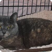 Adopt A Pet :: Violet - Mt. Airy, NC