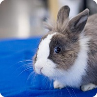 Adopt A Pet :: Rosemary - Los Angeles, CA