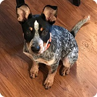 Adopt A Pet :: Ryder - PENDING! - Creston, OH