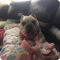 Adopt A Pet :: Darcy - Odessa, FL