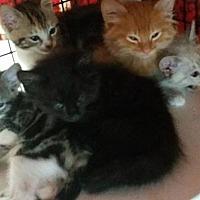 Adopt A Pet :: Daniel Tiger - Monterey, VA