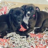 Adopt A Pet :: Dani - Atlanta, GA