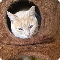 Adopt A Pet :: Sam, Smokey and Coco - Canton, OH