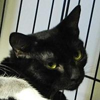 Adopt A Pet :: Ellie Mae - Winston-Salem, NC