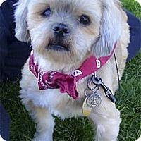 Adopt A Pet :: Ruby 9 pound purebred - Sacramento, CA
