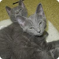 Adopt A Pet :: Charma - Medina, OH