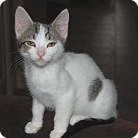 Adopt A Pet :: Spot - The Colony, TX