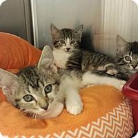 Adopt A Pet :: Rockette - Lawrenceville, GA
