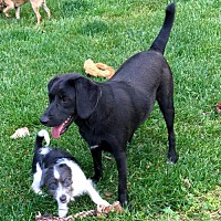 Beagle Mix Puppy for adoption in Winder, Georgia - Ruby