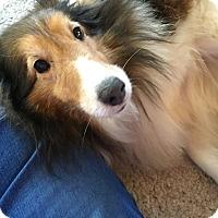 Adopt A Pet :: Whitney - Circle Pines, MN