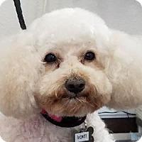 Adopt A Pet :: Sydnee - La Costa, CA