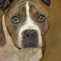 Adopt A Pet :: Tick - Cranston, RI