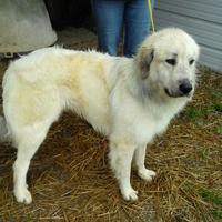 Adopt A Pet :: Slick - Andover, MA