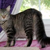 Adopt A Pet :: Christi - Garland, TX
